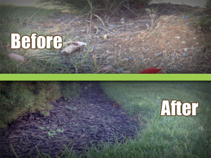 bed edging before and after