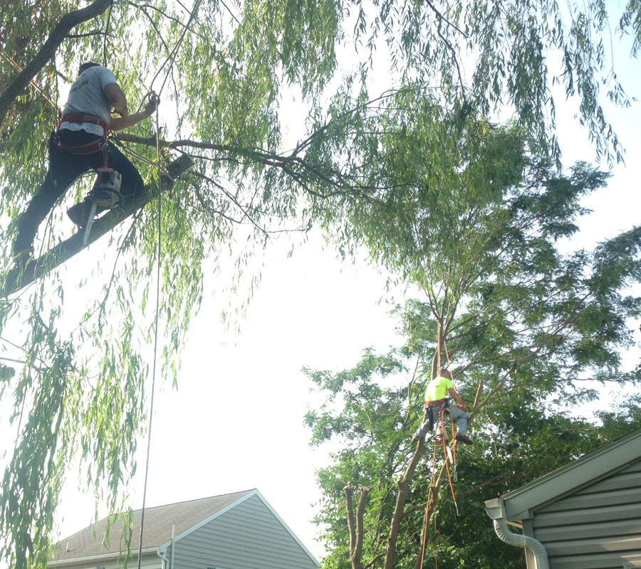 tree trimming service in berks county